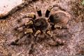 Картинка legs, Spider, hair