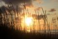 Картинка песок, море, трава, солнце, облака, закат