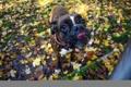Картинка фон, вода, собака