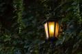 Картинка свет, листва, фонарь, тени