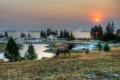 Картинка трава, пейзаж, природа, парк, HDR, олень, США