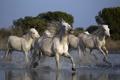 Картинка природа, кони, река