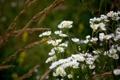 Картинка лето, трава, цветы, зеленое
