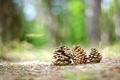 Картинка природа, лес, шишка