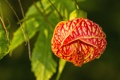 Картинка цветок, листья, природа, лепестки, экзотика