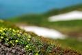 Картинка зелень, поле, трава, листья, свет, земля, стебли