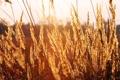 Картинка поле, трава, листья, солнце, свет, закат, вечер