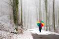 Картинка дорога, зонт, деревья, прогулка