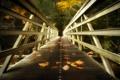Картинка листья, мост, природа
