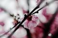 Картинка капли, цветы, ветки, природа, растения, лепестки, розовые