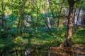 Картинка деревья, скала, гора, водопад, поток