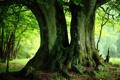 Картинка зелень, лето, деревья, стволы