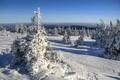 Картинка Саксония-Анхальт, деревья, Германия, Saxony-Anhalt, зима, снег, Germany