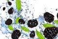 Картинка вода, брызги, ягоды, белый фон, ежевика, blackberry