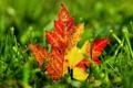 Картинка трава, макро, желтый, лист, зеленая