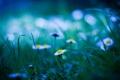 Картинка поляна, трава, блики, ромашки, размытость