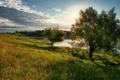 Картинка река, деревья, лето