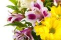 Картинка цветы, белый фон, белые хризантемы, Альстромерия