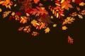 Картинка осень, листья, коллаж, вектор
