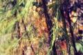 Картинка листья, фотографии, ветки, фоновые обои для рабочего стола, природа, дерево