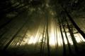 Картинка деревья, CaveCanem42, свет, deviantart, фото