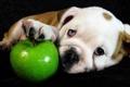 Картинка взгляд, яблоко, собака