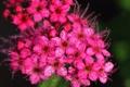 Картинка макро, цветы, лепестки, ярко, усики