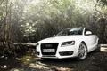 Картинка дорога, белый, свет, Audi, заросли, ауди, купе
