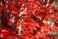 Картинка осень, листья, деревья, ветки, багрянец