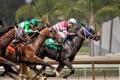Картинка гонка, кони, спорт