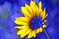Картинка цветок, подсолнух, лепестки, стебель