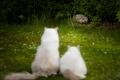 Картинка трава, кошки, цветы, кусты, любопытство, визит