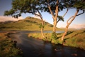 Картинка деревья, пейзаж, природа, река