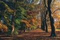 Картинка поле, осень, трава, листья, деревья, парк, собака