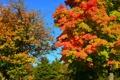 Картинка осень, лес, небо, деревья