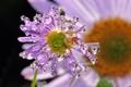 Картинка капли, цветок, нежно, макро
