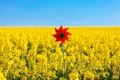 Картинка поле, небо, цветы, природа, фон, widescreen, обои