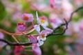 Картинка цветы, ветки, дерево