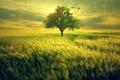 Картинка поле, трава, птицы, дерево