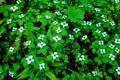 Картинка листья, цветы, ковер, растения, весна