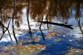 Картинка осень, листья, деревья, озеро