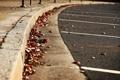 Картинка Макро, Фото, Осень, Листья, Асфальт, Тротуар, Стоянка