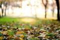 Картинка зелень, осень, трава, листья, макро, деревья, фон