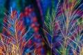 Картинка трава, макро, краски, растение