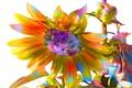 Картинка цветок, линии, краски, подсолнух, лепестки