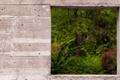 Картинка природа, стена, окно