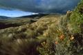 Картинка пейзаж, трава, небо, холмы, горы, тучи, цветы