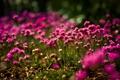 Картинка цветы, поляна, яркие, фокус, солнечно, полевые