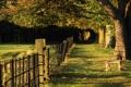Картинка трава, деревья, скамейка, парк, вечер, тени, тропинка