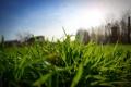 Картинка зелень, небо, Трава, блик, солнце